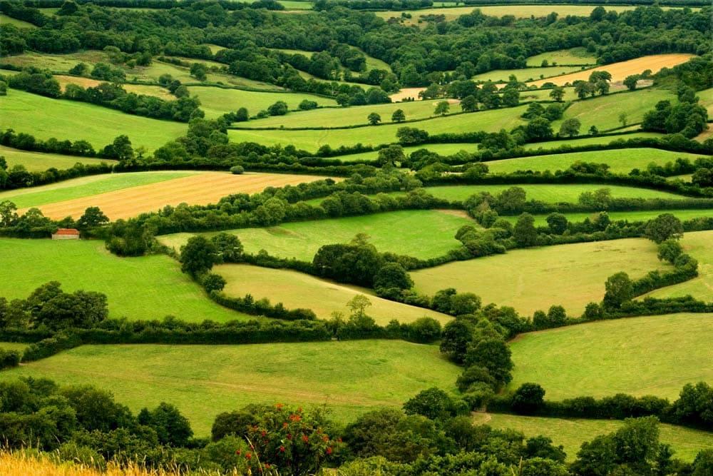 fields in the uk