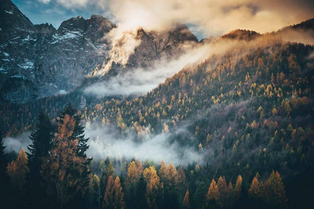 autumn trees in sunlight