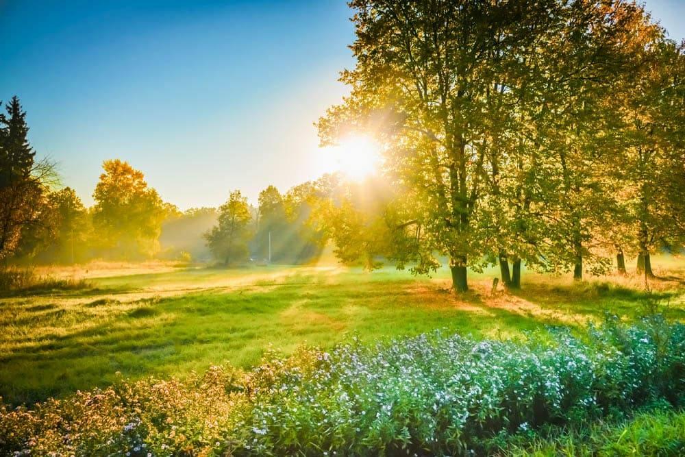 sun over a field